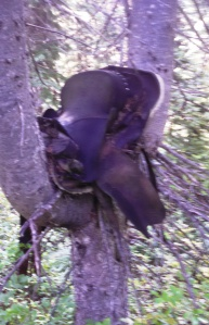 An abandoned saddle resting in a trail-side tree